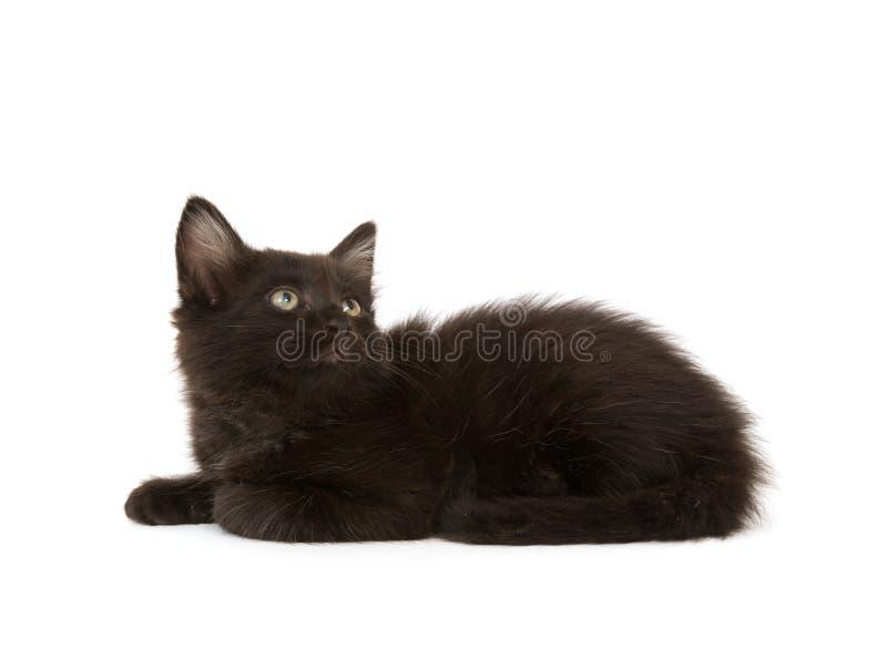 Schwarzes Kätzchen lizenzfreies stockbild