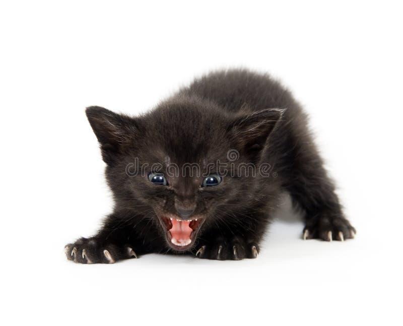 Schwarzes Kätzchen betriebsbereit anzugreifen stockbilder