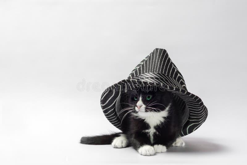 Schwarzes Kätzchen mit den weißen Tatzen unter einem gestreiften schwarzen Hut stockfotos