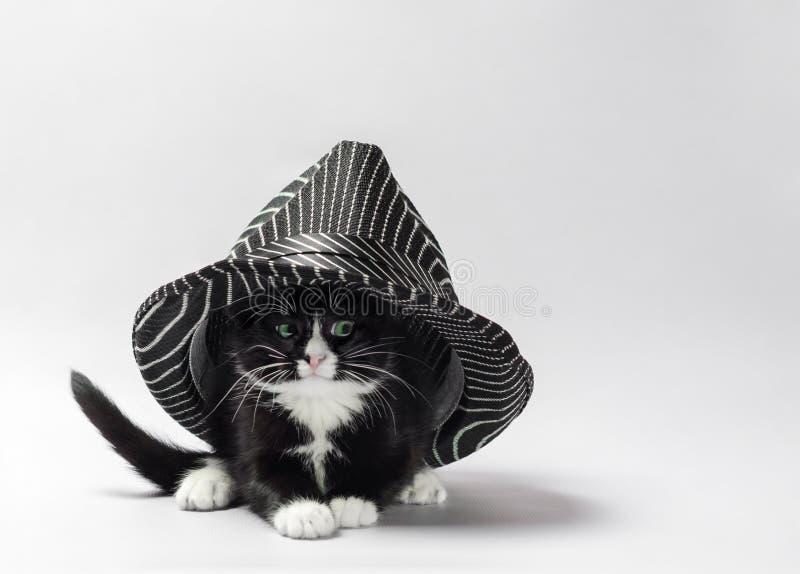 Schwarzes Kätzchen mit den weißen Tatzen unter einem gestreiften schwarzen Hut stockbild