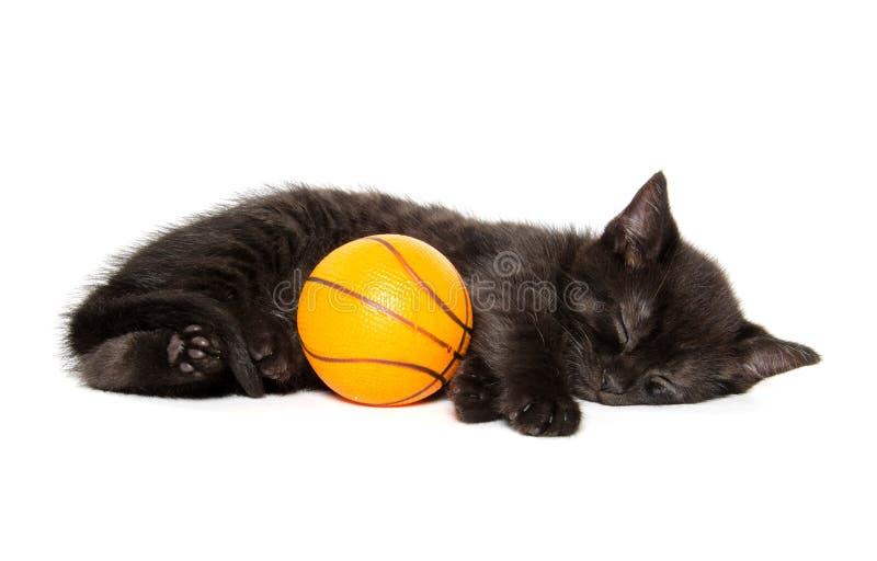 Schwarzes Kätzchen und Basketball stockfotografie