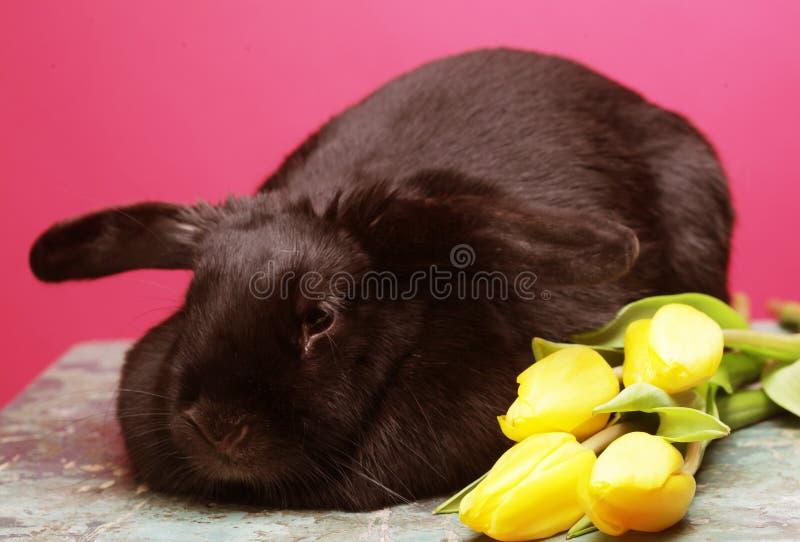 Schwarzes Kaninchen mit gelben Tulpen lizenzfreie stockbilder