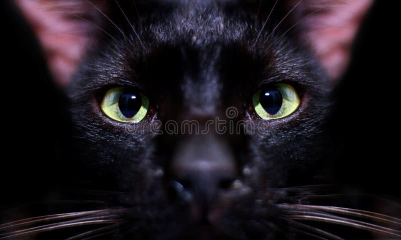 Schwarzes Katzenauge, das über Schwarzem anstarrt stockfotos