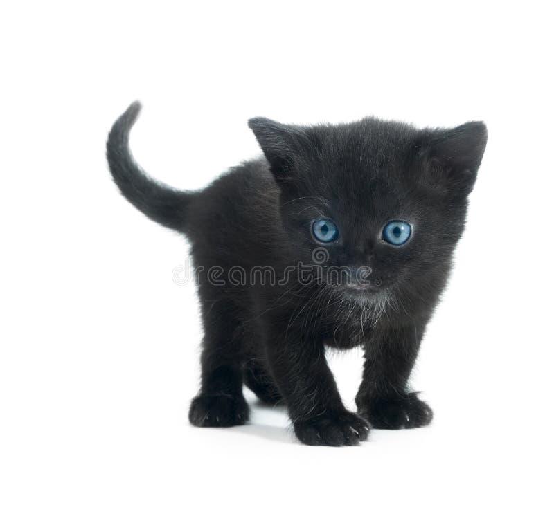 Schwarzes kiten   stockfoto
