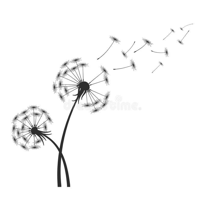 Schwarzes Löwenzahnschattenbild mit den Schlagfliegensamen des Winds lokalisiert auf weißem Hintergrund lizenzfreie abbildung