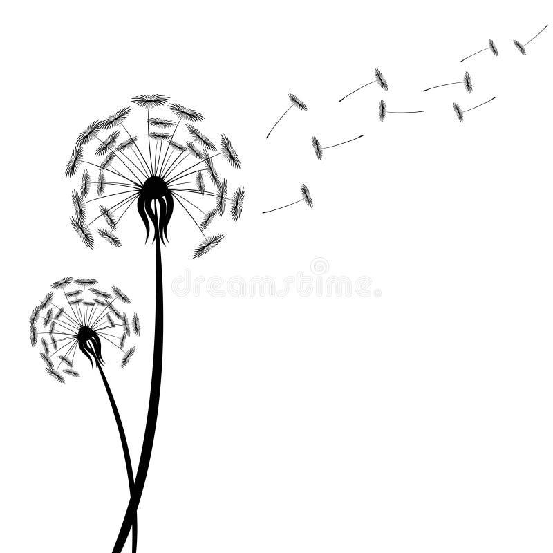 Schwarzes Löwenzahnschattenbild mit Schlagfliegen des Winds sät isolat stock abbildung