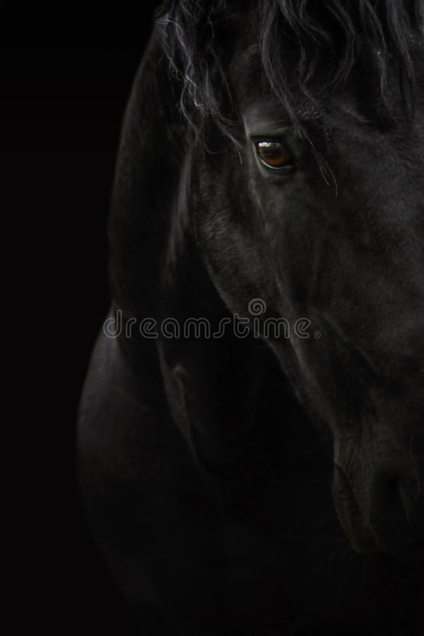 Schwarzes Pferd stockfotos