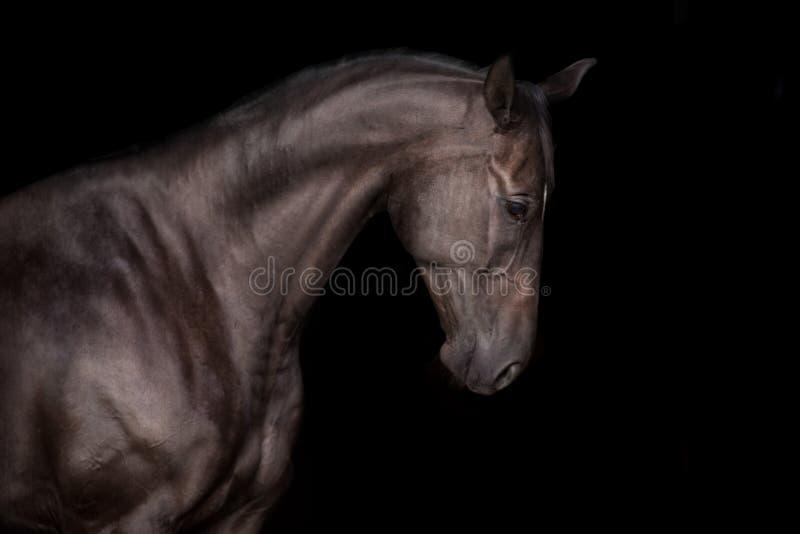 Schwarzes Pferd auf Schwarzem lizenzfreie stockfotos