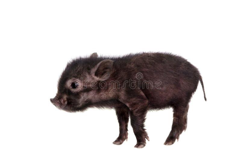 Schwarzes piggy lokalisiert auf Weiß lizenzfreies stockfoto