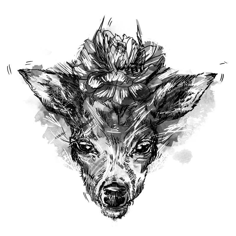 Schwarzes Schattenbild von Rotwild ` s Kopf mit den Geweihen lokalisiert auf weißem Hintergrund lizenzfreie abbildung