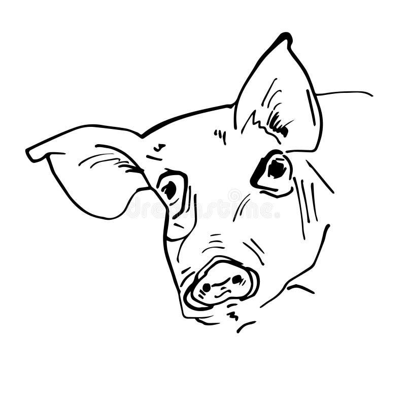 Schwarzes Schweinkopfschattenbild lizenzfreie abbildung