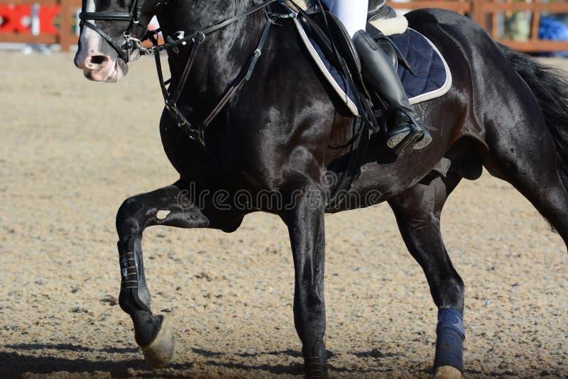 Schwarzes Sportpferd und -reiter auf Galopp Pferdeshow, die ausführlich springt stockfotografie