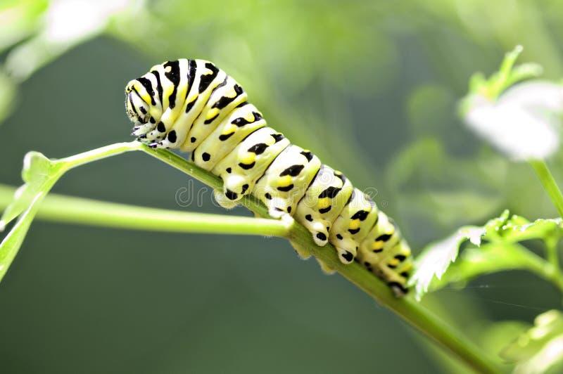 Schwarzes und gelbes Caterpillar auf einem Stamm lizenzfreies stockfoto