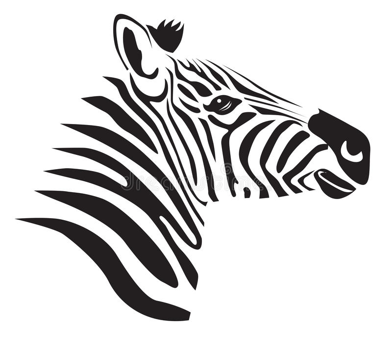 Schwarzes Zebra lizenzfreie abbildung