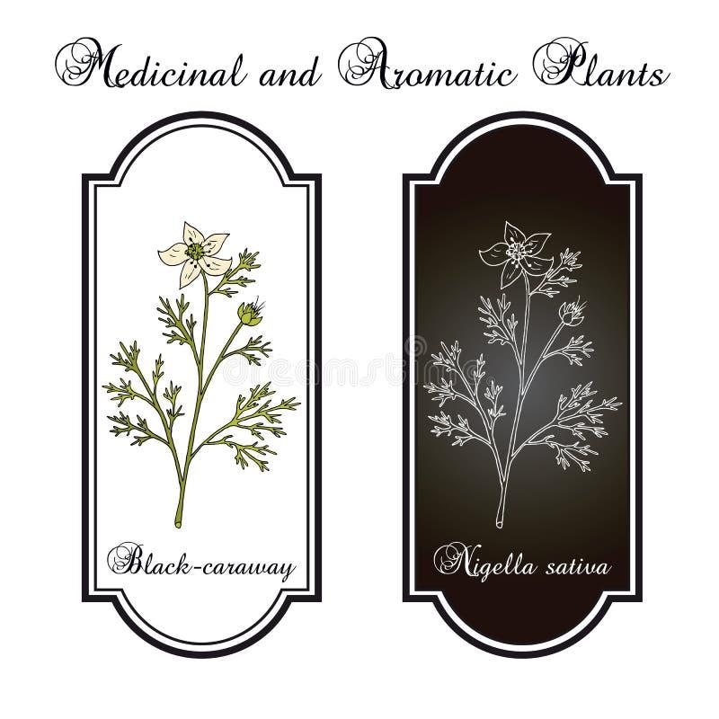 Schwarzkümmel, Nigella Sativa, Heilpflanze lizenzfreie abbildung