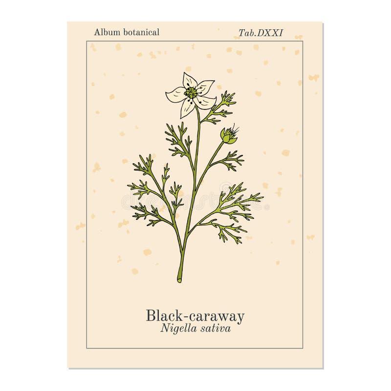 Schwarzk?mmel, Nigella Sativa, Heilpflanze stock abbildung