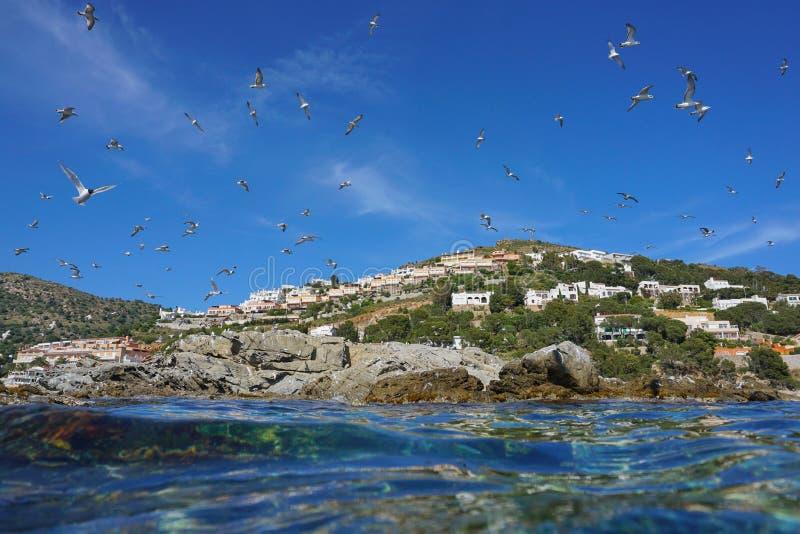 Schwarzkopfmöwen, die über eine felsige Küste fliegen stockbilder