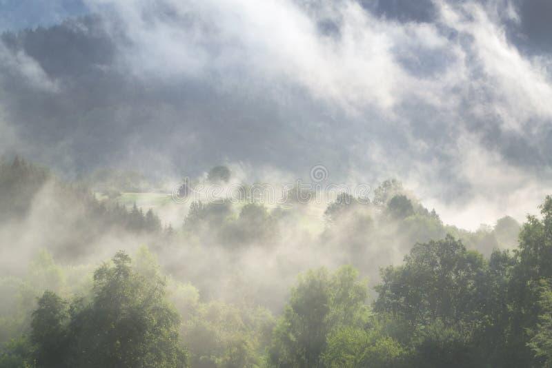 Schwarzwald - Deutschland stockbilder
