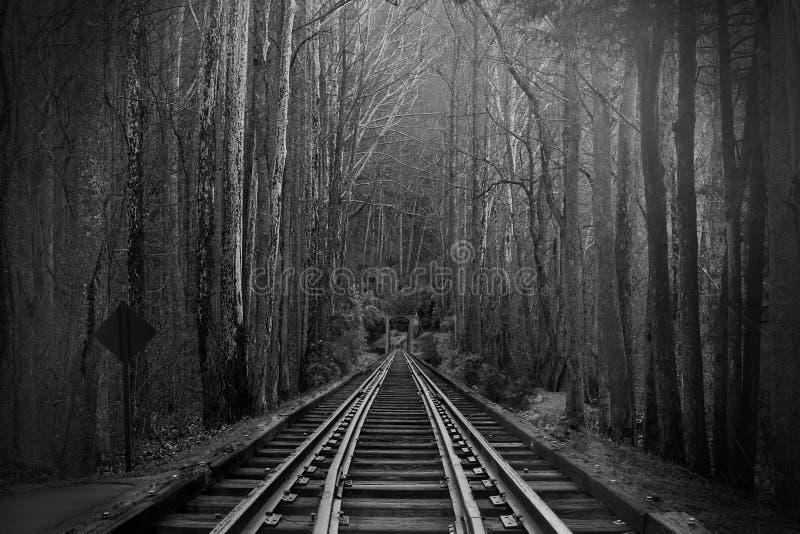 Schwarzweißfotografie von Bahngleisen oder von Eisenbahnen im magischen Fantasie-Wald stockfotos