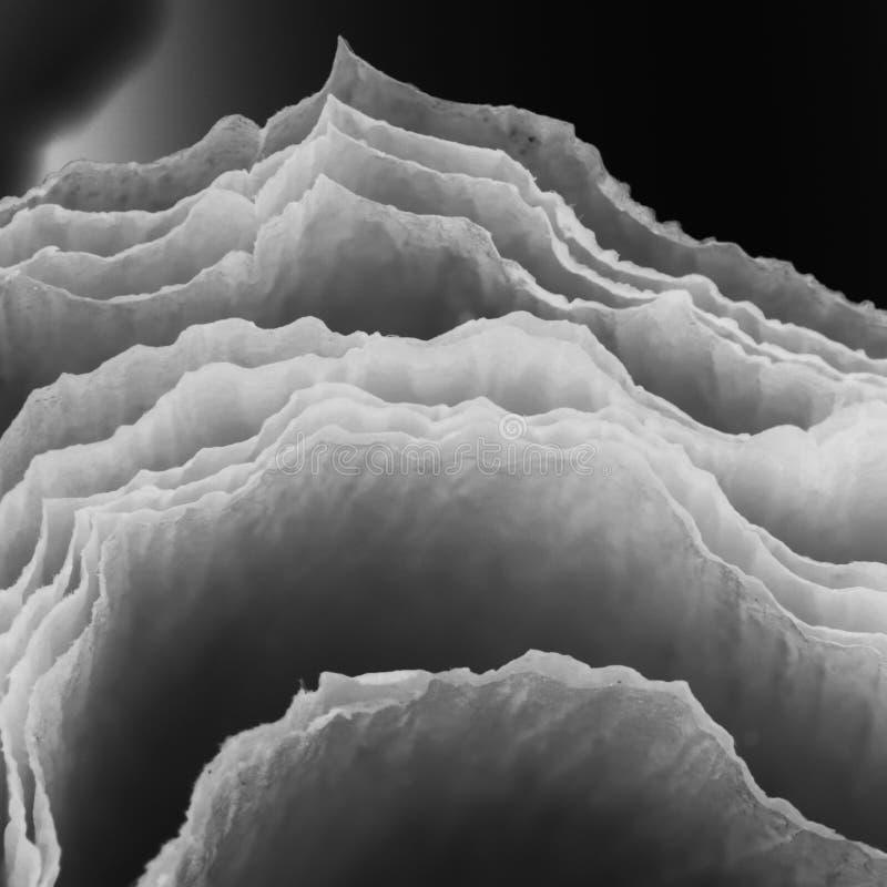 Schwarzweiss--, abstrakte Zusammensetzung mit Krepp lizenzfreies stockbild