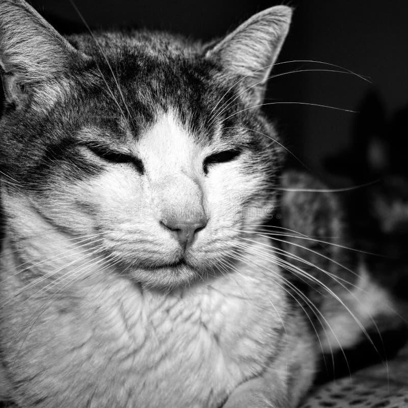 Schwarzweiss-Bild, das ruhige Mischlingskatze auf dem Bett darstellt stockbild