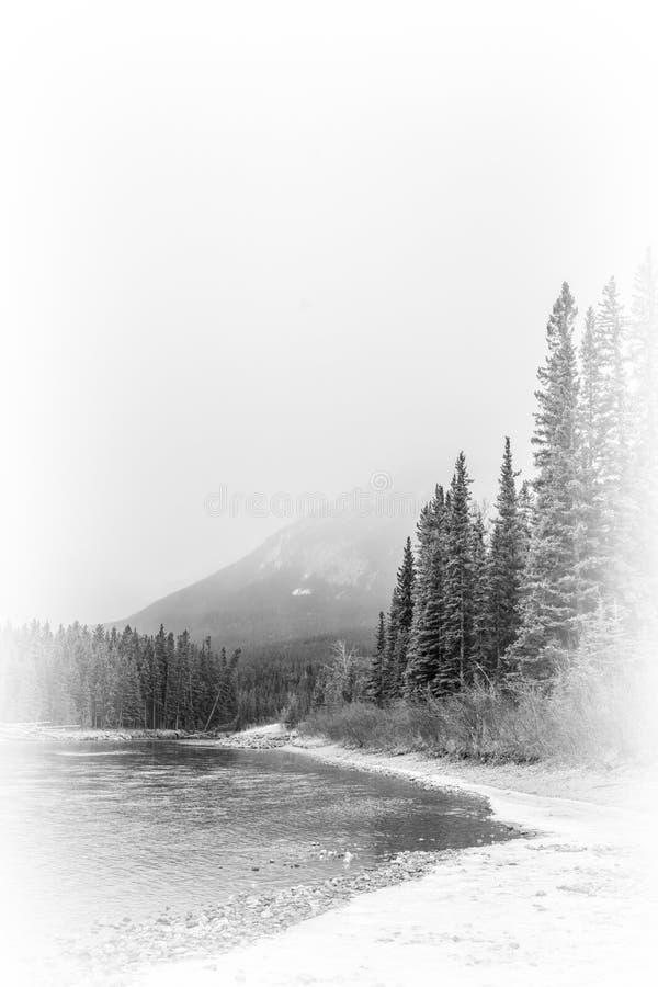 Schwarzweiss-Bild der schönen Kunst von Kiefern, von Fluss und von Berg lizenzfreie stockbilder