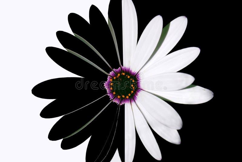 Schwarzweiss-Blume lizenzfreie stockbilder