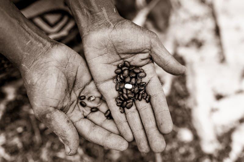 Schwarzweiss-Detail von den offenen Händen der alten afrikanischen Frau, die schwarze Bohnen im Freien in der Landschaft halten lizenzfreies stockfoto