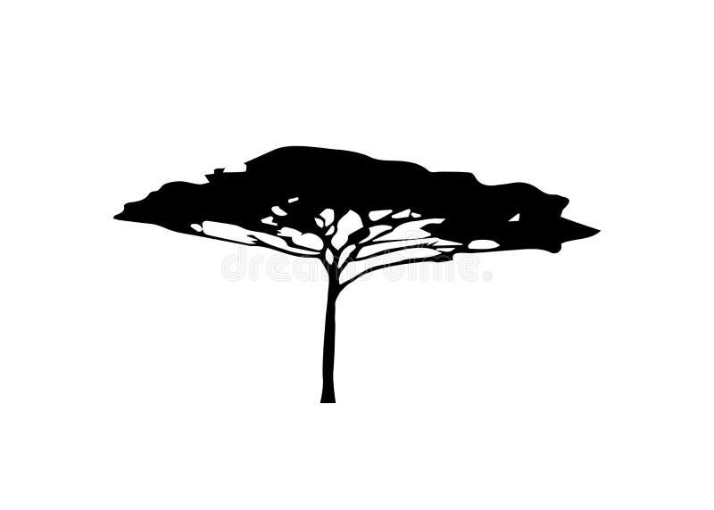 Schwarzweiss-Farbe der afrikanischen tropischen Baumlogo-Ikone, Akazienbaumschattenbild, grüner Natursafariökologie-Konzeptvektor vektor abbildung