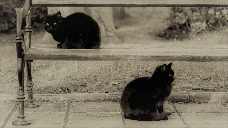 Schwarzweiss-Foto, zwei Katzen sitzen im Park, einer auf der Bank lizenzfreie stockfotos