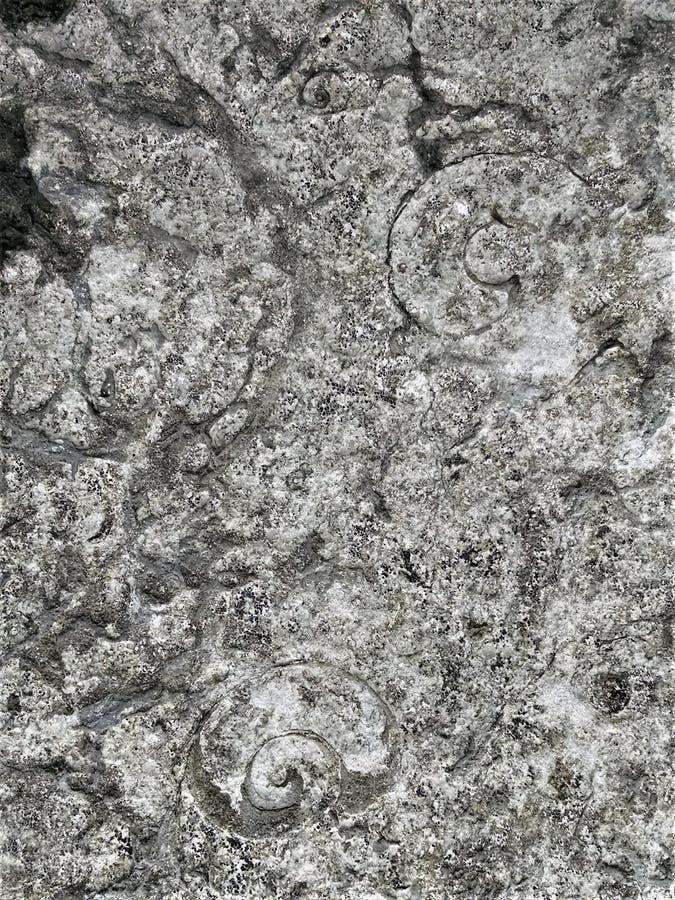 Schwarzweiss-Gastropodescheiben im chazy Kalkstein lizenzfreie stockbilder