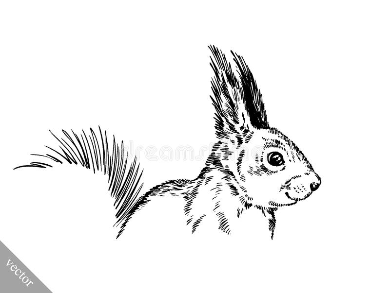Schwarzweiss gravieren Sie lokalisierte Eichhörnchenillustration lizenzfreie abbildung