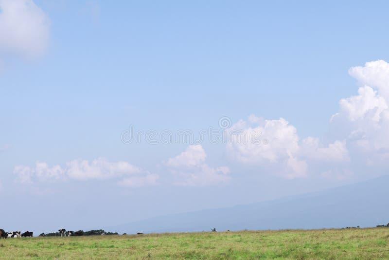 Schwarzweiss-Kühe in einem Bauernhof und schönen in einer Landschaftsansicht von stockfotografie