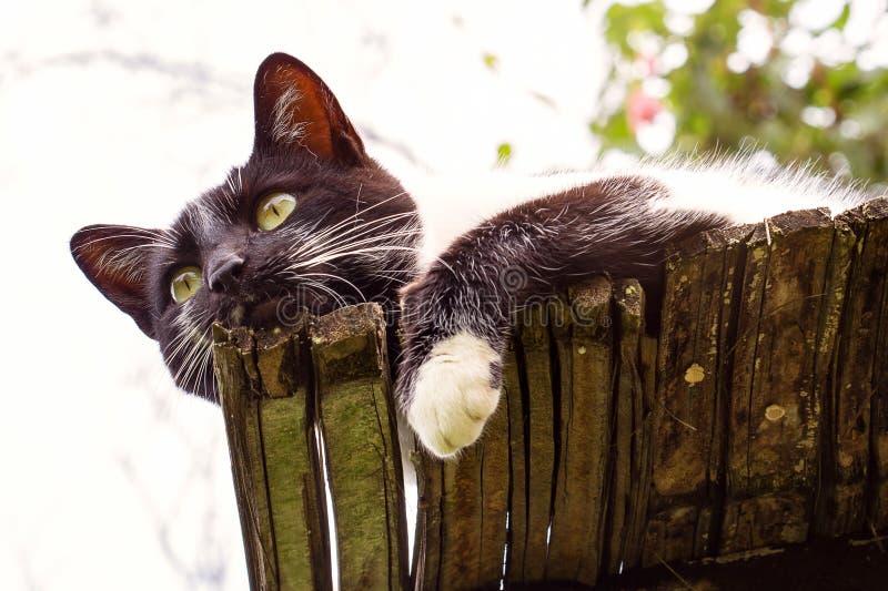 Schwarzweiss-Katze auf einem Dach stockfotos