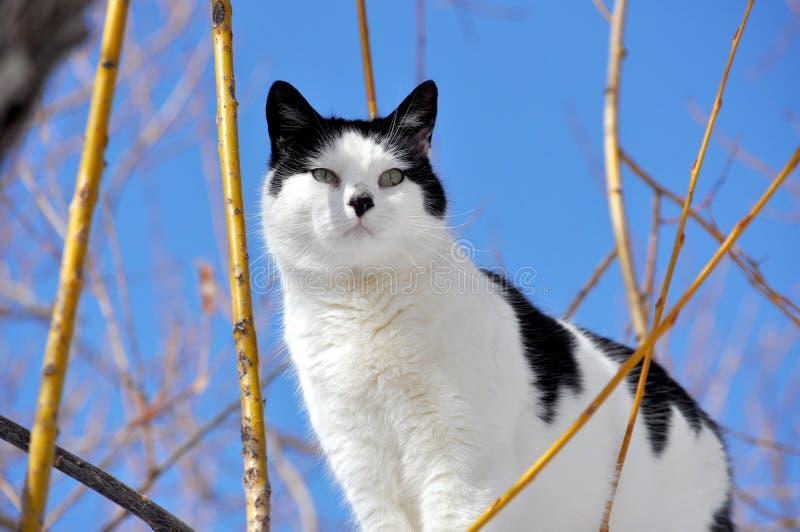 Schwarzweiss-Katze in Willow Tree stockbild