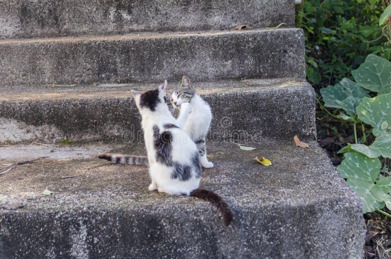 Schwarzweiss-Katzen auf Schritt stockfoto