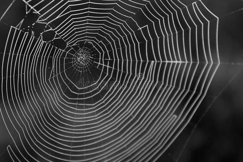 Schwarzweiss-Makrophotographie von einem Spiderweb im Abschluss oben lizenzfreies stockbild