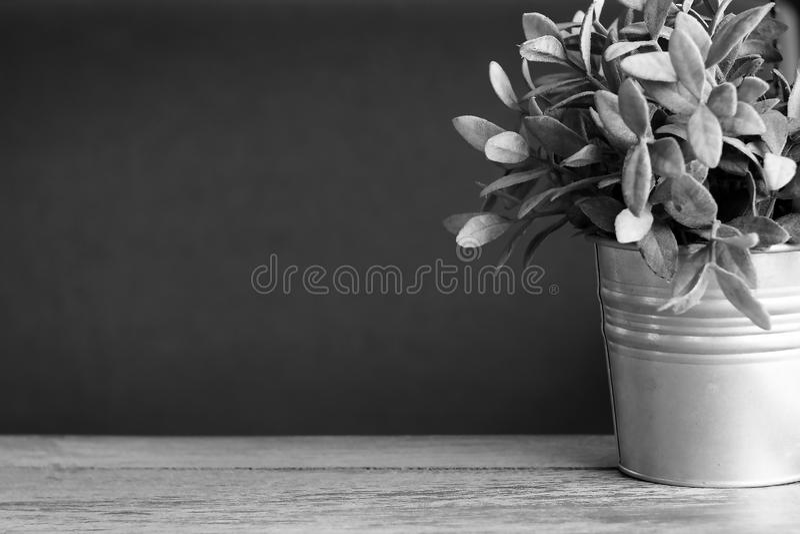 Schwarzweiss-Porträt wenig einsamer gefrorener Baum in der Wintersaison lizenzfreie stockfotos