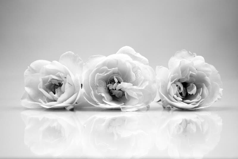 Schwarzweiss, Stilllebenzusammensetzung mit hölzernen geometrischen Stücken mit weißen Rosen lizenzfreies stockfoto