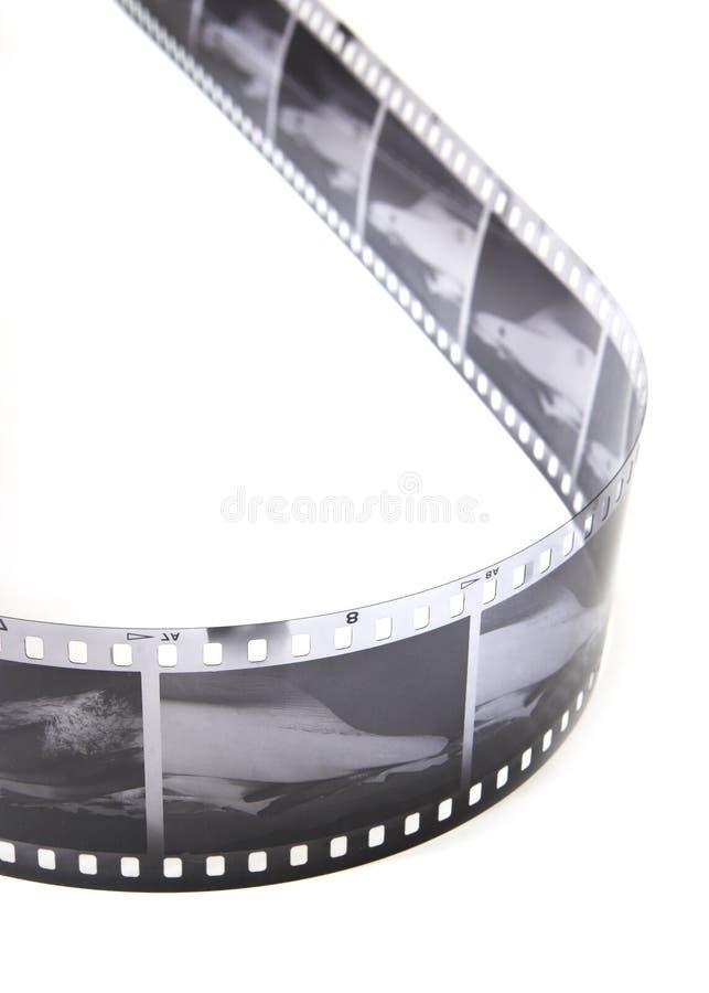 Schwarzweiss-Streifen lizenzfreies stockbild