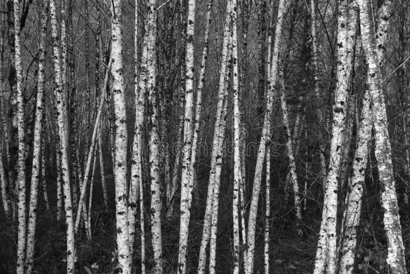 Schwarzweiss-Suppengrün zusammen gruppiert lizenzfreie stockbilder