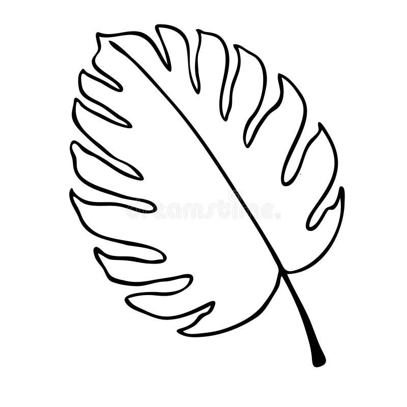 Schwarzweiss-Vektorillustration des Blattes auf weißem Hintergrund stockfotos