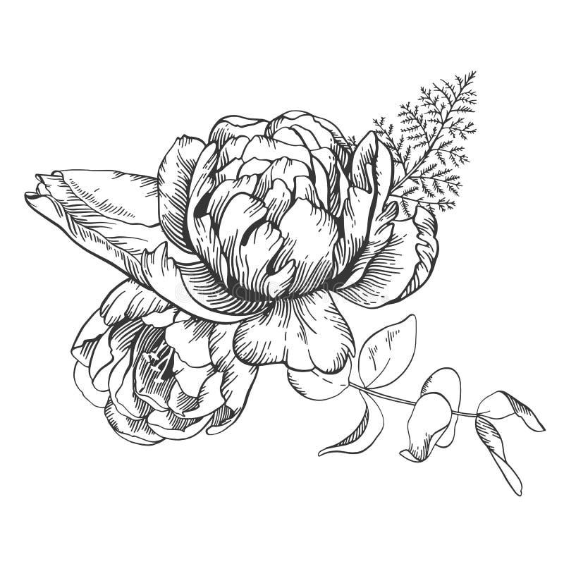 Schwarzweiss-Vektorlinie Skizzenillustration, Blumenstrauß der Tulpe und Pfingstrose stock abbildung