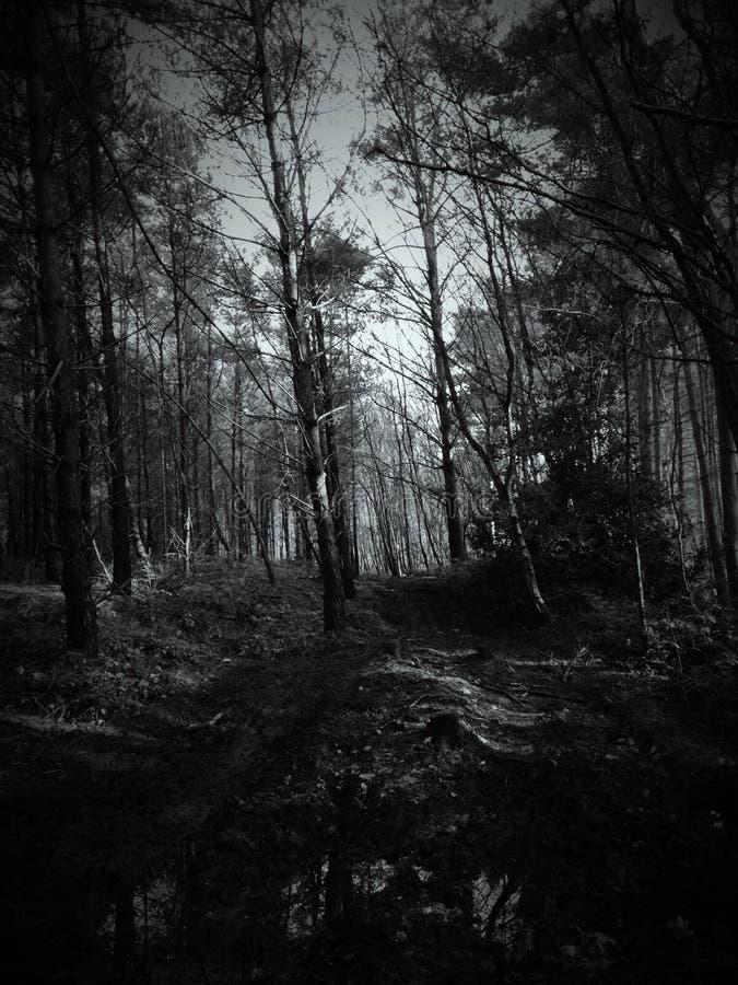Schwarzweiss-Wald lizenzfreie stockfotos