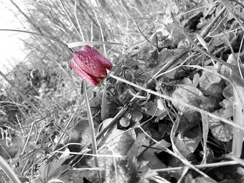 Schwarzweiss-Waldnatur lizenzfreies stockbild