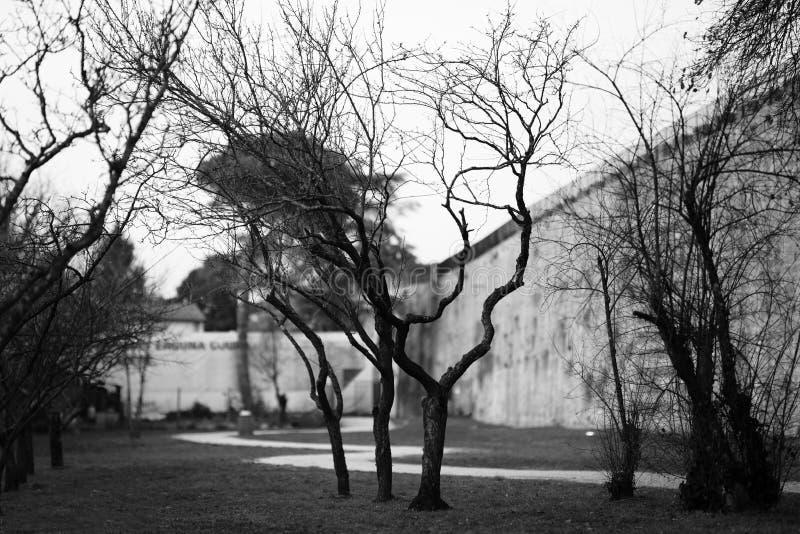 Schwarzweiss-Winterlandschaft mit bloßen Bäumen stockfotografie