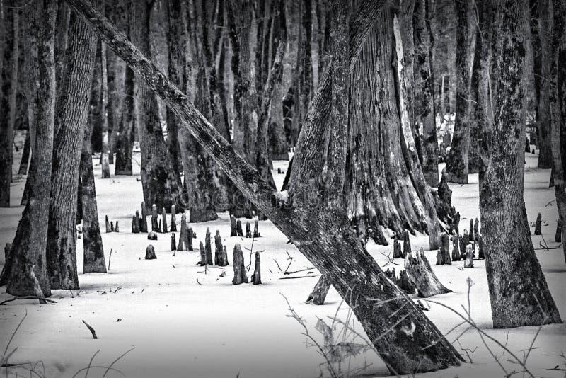 Schwarzweiss--Zypern-Knie im Schnee stockbilder
