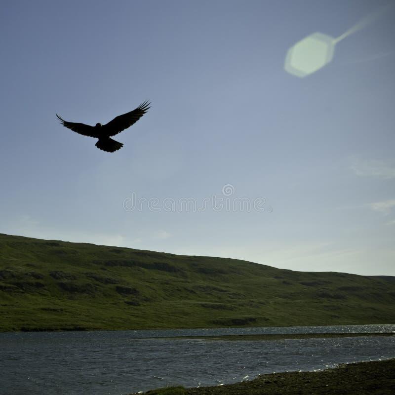 Schwebender Rabe in einem isländischen Tal lizenzfreie stockfotos