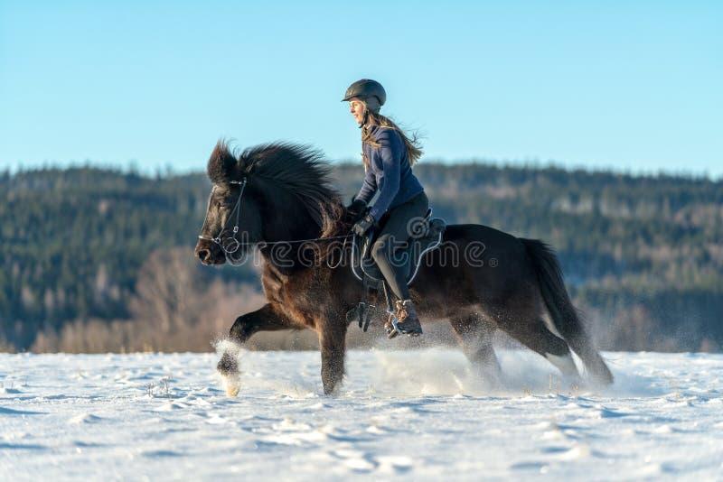 Schwedisches Mädchen, das ihr isländisches Pferd im tiefen Schnee und im Sonnenlicht reitet lizenzfreies stockfoto