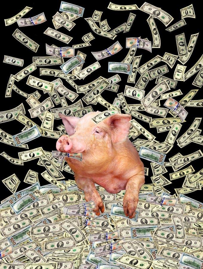 Schwein auf dem Haufen von Dollar stockbilder